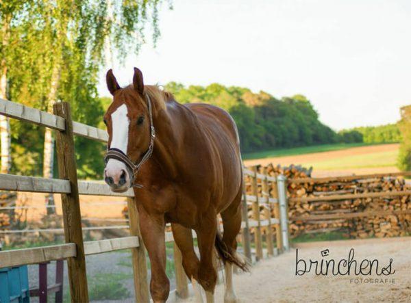 Pferdezaun Stecksystem Combi, Paddockzaun für Pferde