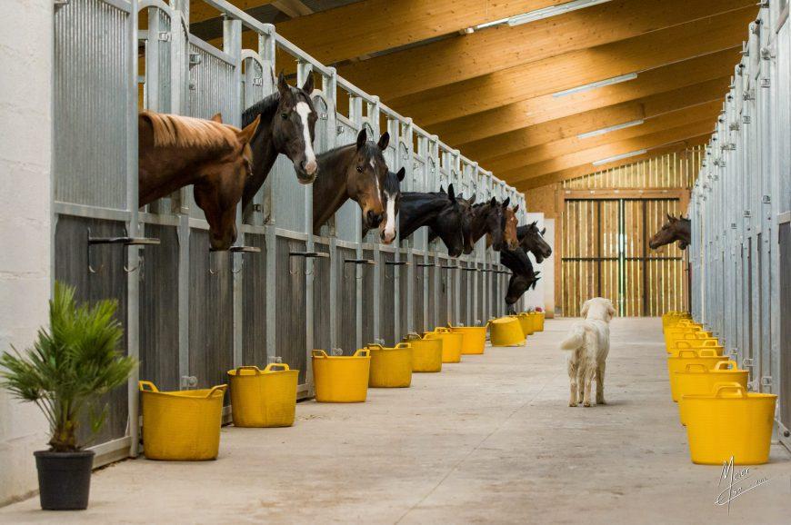 Rutjes Pferdeboxen jetzt auch in Frankreich