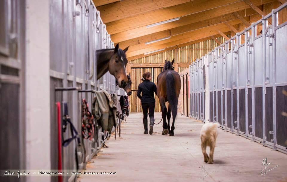 ruime paardenboxen in Frankrijk